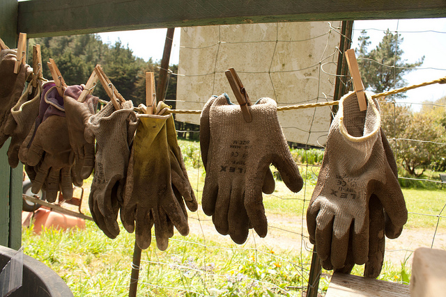 work gloves hanging to dry